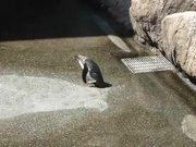 Penguin Vs Butterfly