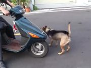 Scooter Dog Is Trained