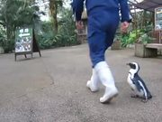 Penguin Chasing Zookeeper