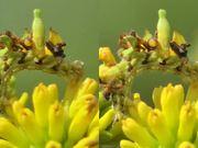 3D Cross-Eye: Camouflaged Caterpillar